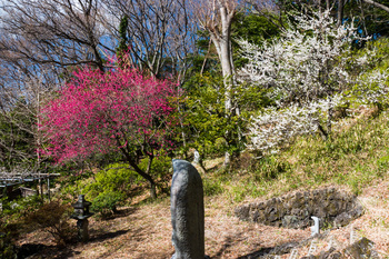 宝蔵院墓地.jpg