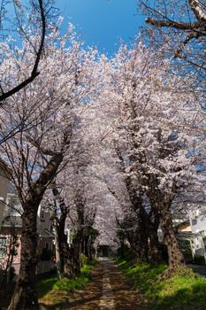 神社-2.jpg